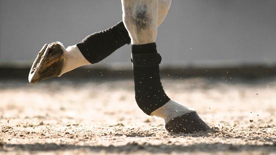 セレクティブフォーカス「日当たりの良いアリーナで動いている馬の蹄」:スマホ壁紙(8)