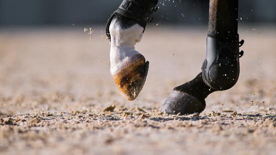 セレクティブフォーカス「日当たりの良いアリーナで動いている馬の蹄」:スマホ壁紙(9)