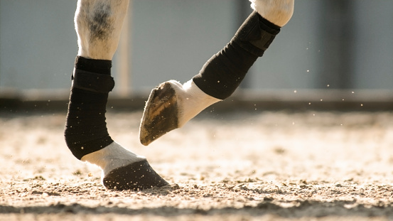 セレクティブフォーカス「日当たりの良いアリーナで動いている馬の蹄」:スマホ壁紙(12)