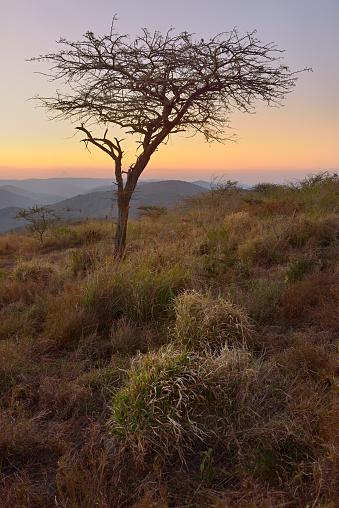 Escarpment「Lone tree with sunset backdrop on the Zululand Escarpment. Full colour vertical image. Thanda Game Reserve, Kwazulu Natal Province, South Africa」:スマホ壁紙(19)