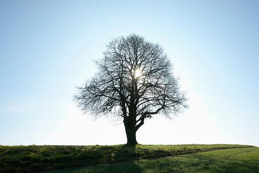 Harz National Park「Lone Tree with Sun」:スマホ壁紙(14)