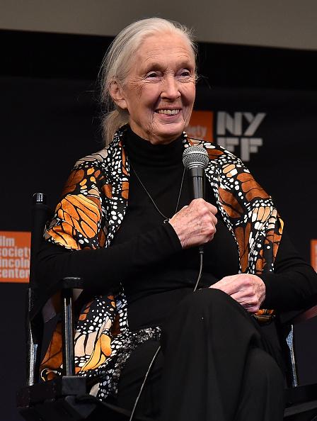 リンカーンセンター ウォルターリードシアター「55th New York Film Festival - 'Jane'」:写真・画像(3)[壁紙.com]