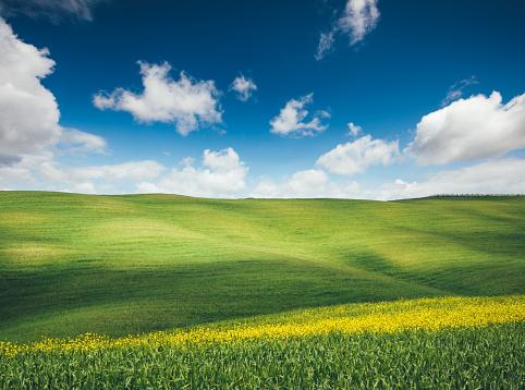 アブラナ「牧歌的なトスカーナの風景」:スマホ壁紙(1)