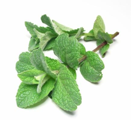 Mint Leaf - Culinary「Peppermint」:スマホ壁紙(7)