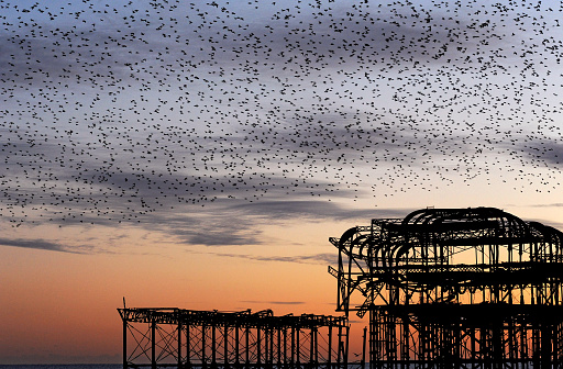 Brighton - England「Murmuration over the ruins of Brighton's West Pier.」:スマホ壁紙(15)
