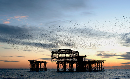 Hove「Murmuration over the ruins of Brighton's West Pier on the south coast of England: a flock starlings perform aerial acrobatics over the pier at sunset.」:スマホ壁紙(18)