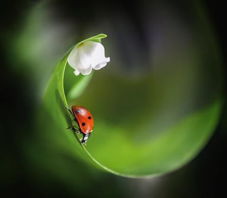 Ladybug「Ladybug on leaf near flower」:スマホ壁紙(15)