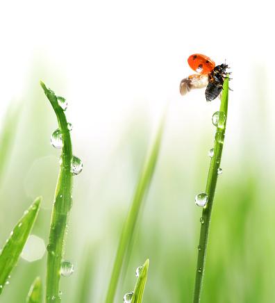 這う「テントウムシ緑の芝生」:スマホ壁紙(16)
