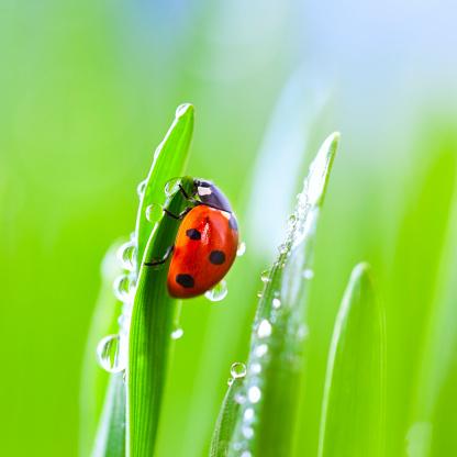 Insect「Ladybug on grass」:スマホ壁紙(15)