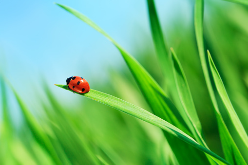 Extreme Close-Up「Ladybug on grass」:スマホ壁紙(14)