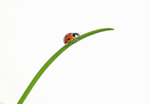 Ladybug「Ladybug on Grass」:スマホ壁紙(12)