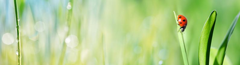 季節「テントウムシの芝生」:スマホ壁紙(0)