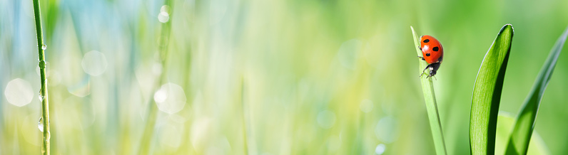 Insect「Ladybug on grass」:スマホ壁紙(16)