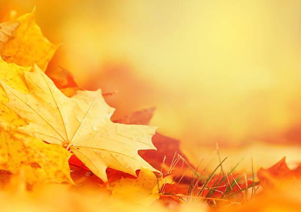 Falling Leaf Frame:スマホ壁紙(壁紙.com)