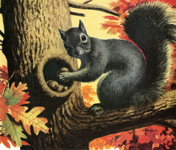 Gray Squirrel「Squirrel Hiding Acorns In Tree」:写真・画像(1)[壁紙.com]