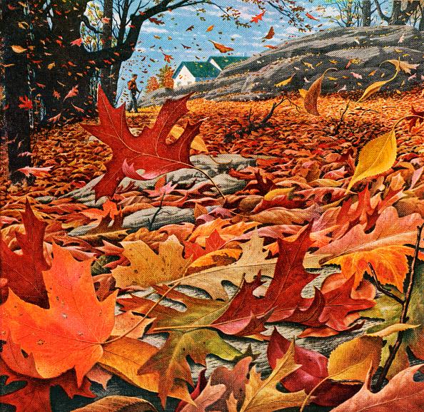 葉・植物「Swirling Fall Leaves」:写真・画像(15)[壁紙.com]