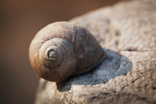 snails「Snail shell on a wall at the stone ruins of a biblical site」:スマホ壁紙(12)