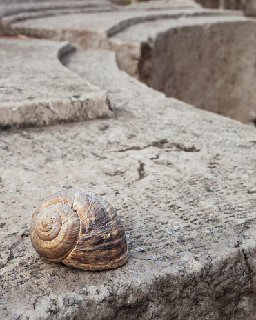 snails「Snail shell on a wall at the stone ruins of a biblical site」:スマホ壁紙(13)