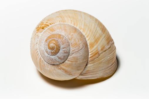 snails「Snail shell   (image size XXXLarge)」:スマホ壁紙(16)