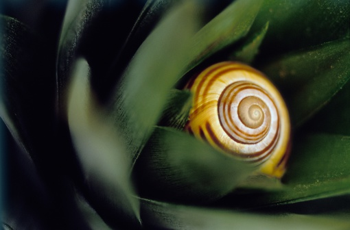 snails「Snail shell resting amongst green foliage, april」:スマホ壁紙(14)