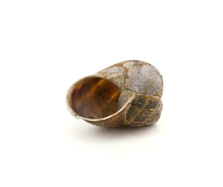 snails「Snail Shell」:スマホ壁紙(18)