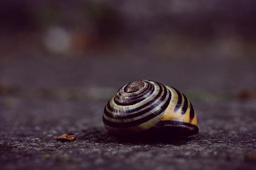 snails「Snail Shell」:スマホ壁紙(9)
