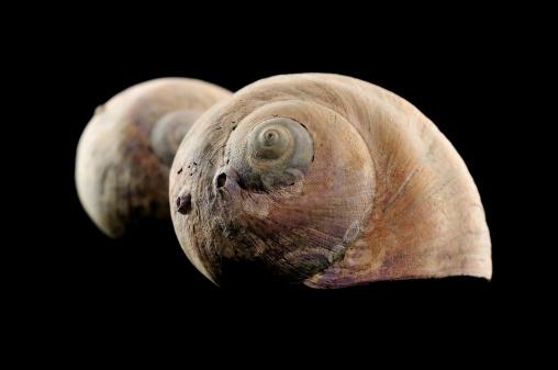 snails「Snail shell」:スマホ壁紙(4)