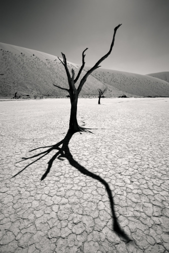 Namibian Desert「Dead Vlei Shadows」:スマホ壁紙(15)