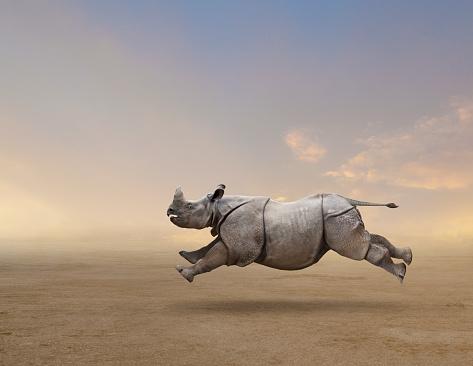 Rhinoceros「Rhinoceros running in rural field」:スマホ壁紙(11)