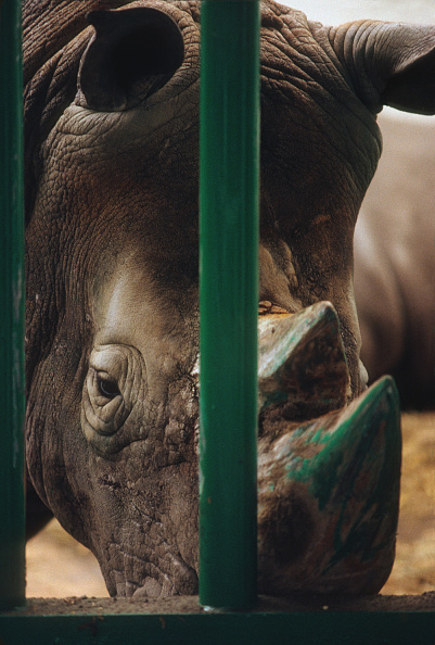 Confined Space「Painted Rhinoceros」:写真・画像(14)[壁紙.com]