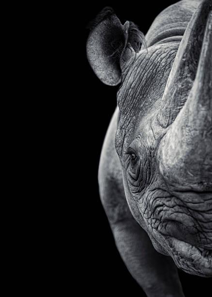 Rhinoceros:スマホ壁紙(壁紙.com)