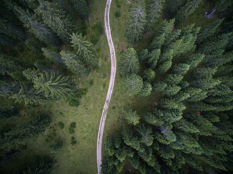 Veneto「AERIAL view of trail passing through forest」:スマホ壁紙(12)