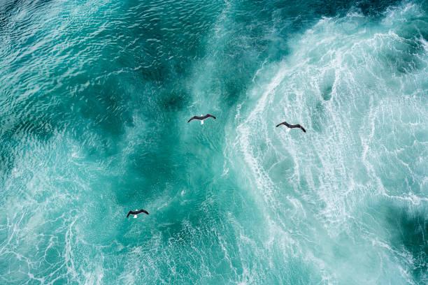 Three doves flying over North Atlantic:スマホ壁紙(壁紙.com)