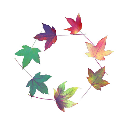 Continuity「Circle of maple leaves on white in square format」:スマホ壁紙(9)