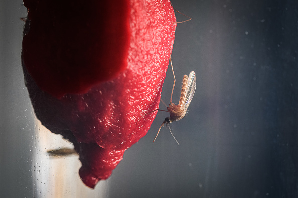 Animal「Scientists Investigate Whether Climate Change Will Encourage Arrival Of Tropical Diseases Via Mosquitoes」:写真・画像(1)[壁紙.com]