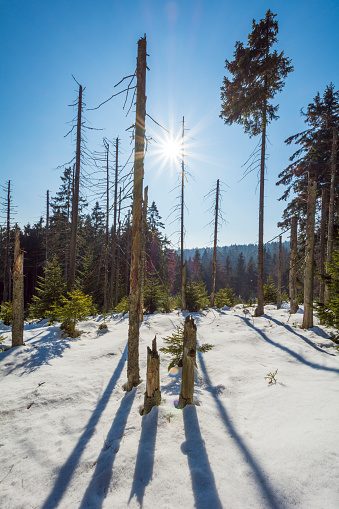 Harz Mountain「Mountain Forest with Sun in Winter, Altenau, Harz, Lower Saxony, Germany」:スマホ壁紙(15)