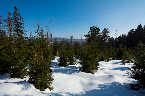 Harz Mountain「Mountain Forest in Winter, Altenau, Harz, Lower Saxony, Germany」:スマホ壁紙(18)