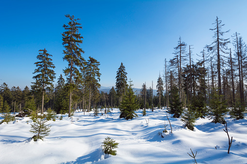 Harz Mountain「Mountain Forest in Winter, Altenau, Harz, Lower Saxony, Germany」:スマホ壁紙(19)