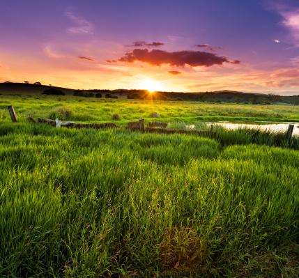 Queensland「Morning Dew」:スマホ壁紙(8)