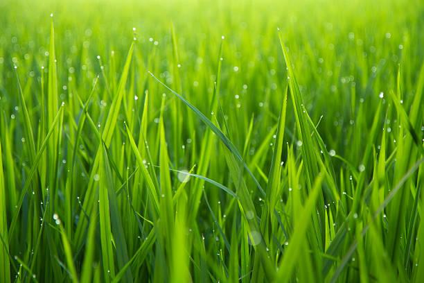 Morning Dew Drops on Green Leafs:スマホ壁紙(壁紙.com)