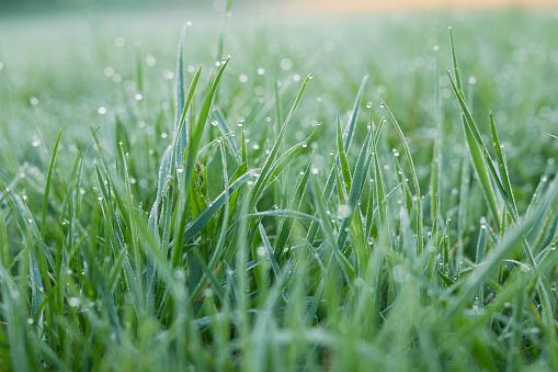 繊細「Morning dew on grass」:スマホ壁紙(0)