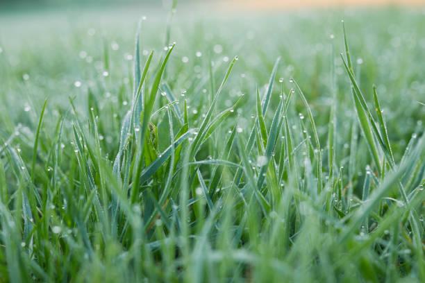 Morning dew on grass:スマホ壁紙(壁紙.com)