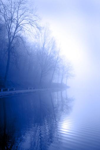 Fog「foggy morning」:スマホ壁紙(3)