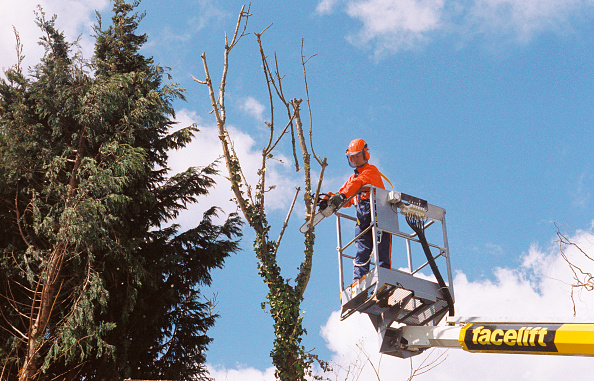 Cutting「Pruning tree branches using chainsaw.」:写真・画像(4)[壁紙.com]