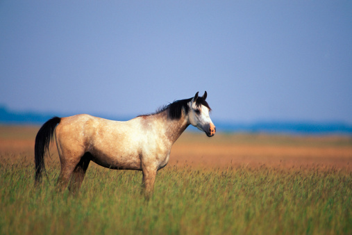 Carefree「Nonius horse, close-up」:スマホ壁紙(14)