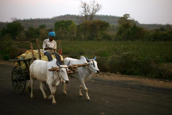 Farmer「Crop Failures Provoke Suicides Amongst Indian Farmers」:写真・画像(6)[壁紙.com]