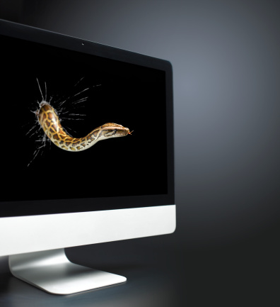 Evil「Burmese python coming out of computer screen」:スマホ壁紙(13)
