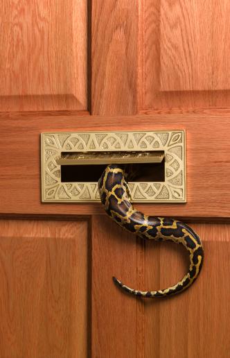 Evil「Burmese python going into letterbox」:スマホ壁紙(1)