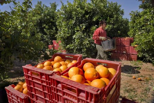 Orange - Fruit「Valencia, Spain」:写真・画像(9)[壁紙.com]