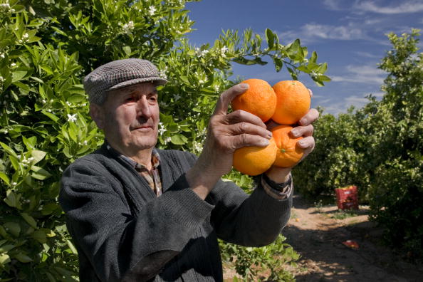 Orange - Fruit「Valencia, Spain」:写真・画像(16)[壁紙.com]
